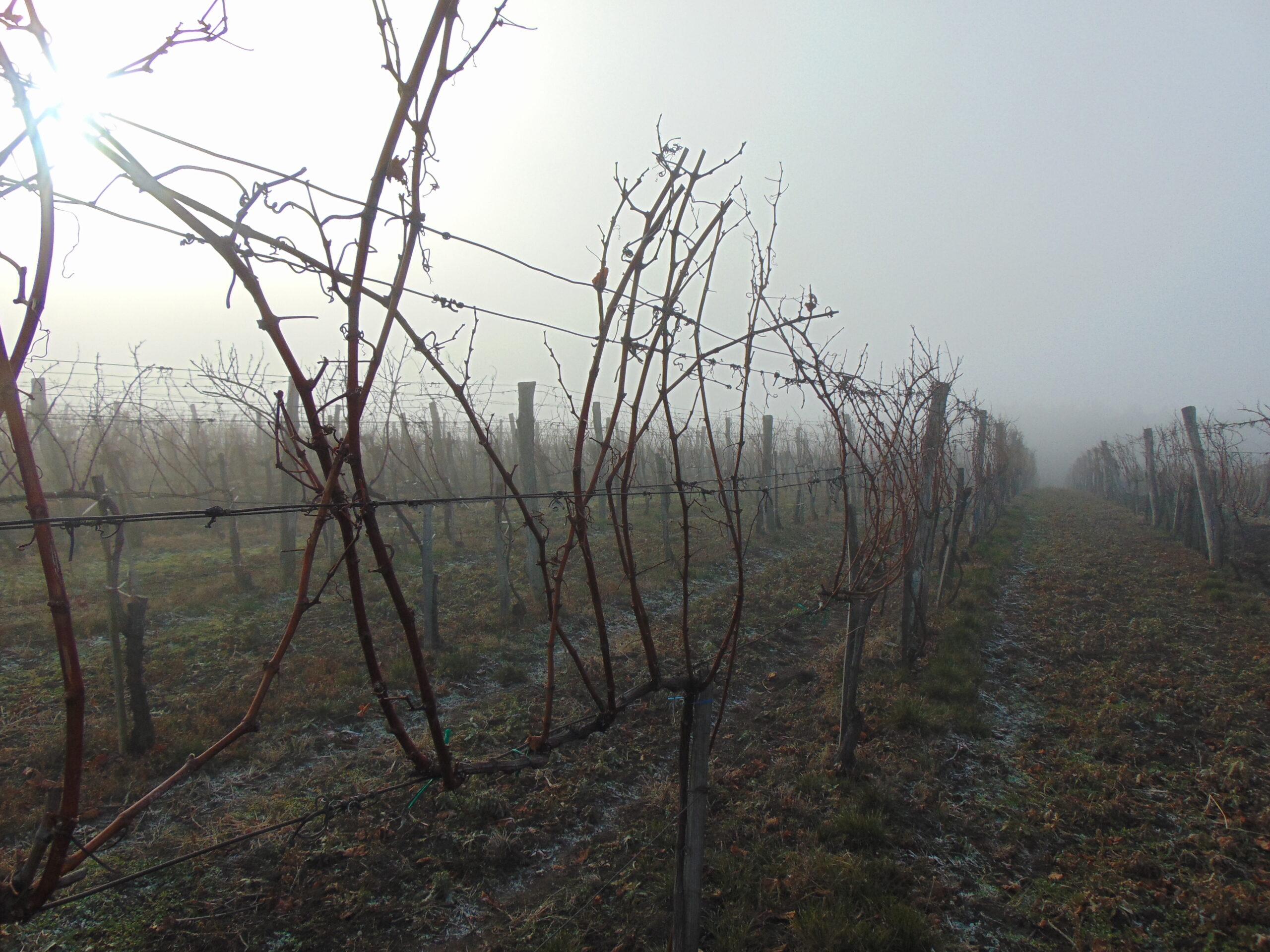 Chardonnay - Bükkzsérc - adatlap