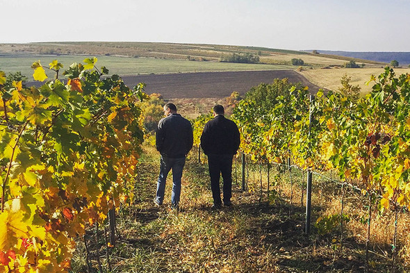 To save the Bükk wine region